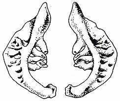 Pesce rosso carassius auratus linnaeus 1758 for Carpa pesce rosso